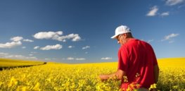 Blocking innovation: How Canada's novel plant-breeding rules hinder progress in food production
