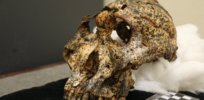 3-D technology is reinventing paleoanthropology and the reconstruction of fossils