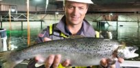 Florida Atlantic salmon? Recirculating aquaculture systems without antibodies or vaccinations poised to spur boom in in-land fish farming