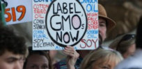 Overwhelming majority of Europeans support compulsory labeling of GM-derived food, claims study commissioned by EU Green group