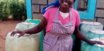 Kenyan farmers reap bountiful first harvest of GM cotton