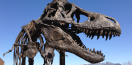 2.5 billion: That's how many T. rexes may have roamed the Earth over their 3-million-year reign