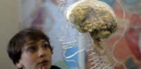 Brain size v body size: 'There is no single evolutionary path to a bigger brain'