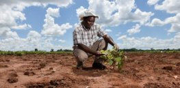 Climate change is roiling the African continent. With cutting-edge biotech solutions largely blocked, governments rely on tweaks of more traditional technologies to boost output