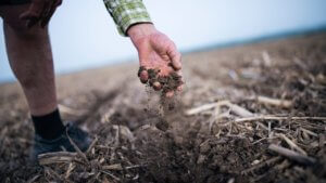 Viewpoint: Carbon negative farming? Cover crops, rotational grazing and no till agriculture could capture greenhouse gas emissions