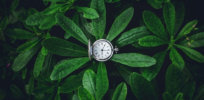 Hacking plants' circadian clock: How watering and applying pesticides at the most effective time of day can boost yields
