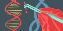 Is there a difference between a gene-edited organism and a 'GMO'? The question has important implications for regulation