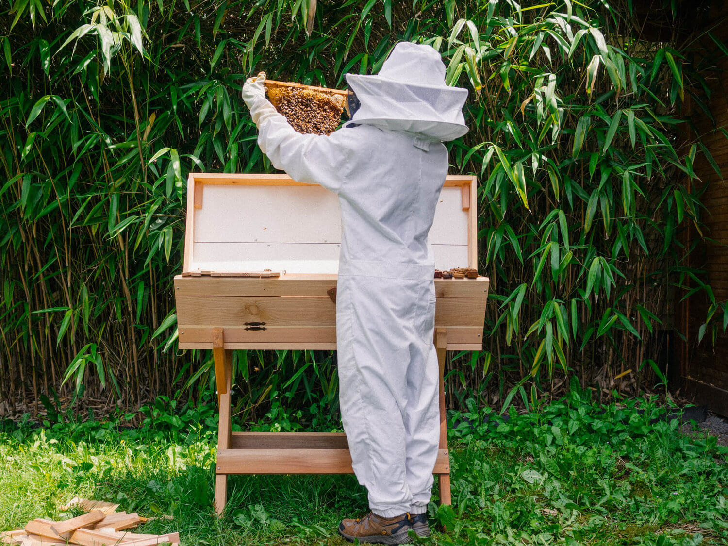 Video: 'We're saving the wrong bees' — Journalist argues that focusing concern on 'backyard bees' undercuts effort to save wild populations responsible for most crop pollination