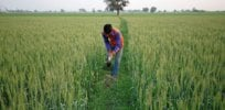 'Carbon is not our enemy but our ally': Here's a living laboratory in India studying how crop and livestock farmers can address agriculture's adverse climate impacts