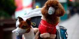 What might happen if viruses jump from pet dogs to humans? That worrisome future is already here