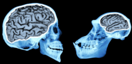 Brains make the difference: Here's the root of human self-reflection and self awareness