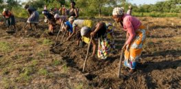Viewpoint — 'It is wrong to leave Africans at the mercy of organic farming': Western activists should not force 'unproductive agroecology' on developing farmers