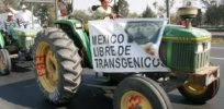 Mexican judge upholds 2024 ban of GMO corn and glyphosate, threatening to upend US trade relationship