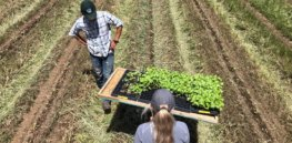 Viewpoint — 'We're trying to mimic mother nature': Why healthy soil is key to cutting back on pesticides and growing climate-resilient crops