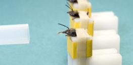 We will need COVID tests for years to come, posing challenges for poorer countries. Here's how trained, virus-detecting bees could be a godsend