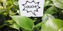 Plants respond to injuries in fascinating ways. Can they feel pain?