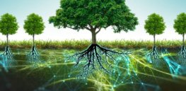 Are trees social beings? They exchange nutrients, help one another, and communicate about pests and other environmental threats