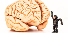 Are human brains the evolved pinnacle of problem-solving evolution? The reality may be more mundane