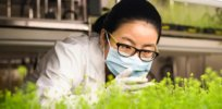 Canada's plant-based COVID vaccine jumps latest hurdle on way toward approval