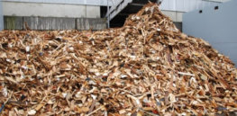 Edible wood? By tapping into the 'natural genetic potential of microorganisms', tree waste can be transformed into food-grade protein