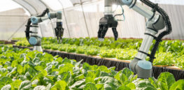 Viewpoint — 'Less food waste, lower carbon footprints and a socially sensitive food system': Tech-enabled farming intensification is the only science-based path to sustainability