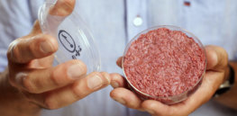 'Protein transition': Everything you need to know about the coming clean, cultured, alternative meat revolution