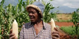 GM crops: 'Let the farmers decide'