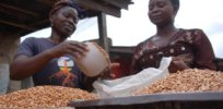Zambia's biosafety authority set to destroy 2,000 tons of GMO seeds in accordance with country's ban