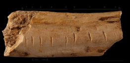 An instinct for numbers? Ancient humans and even some animals evolved the ability to count
