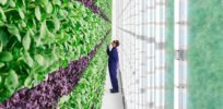 Video: To feed nearly 8 billion people, we need to grow more food on less land. Vertical farming could increase yields by up to 700%
