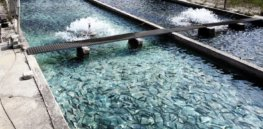 Viewpoint: Is aquaculture good for the planet? Here's a carbon footprint sustainability snapshot