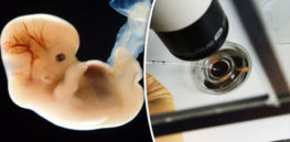 Viewpoint: Patenting human embryo gene editing? Two rival universities push the ethical and legal debate