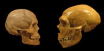 50,000 years ago, the Negev desert was home to consorting humans and Neanderthals