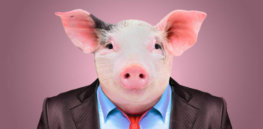 Humanized pigs: How scientists bioengineered swine with human immune systems to accelerate research on viruses, vaccines, cancer and stem cell therapeutics