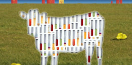 Search for the perfect cell-donor cow: Why cultured lab-grown beef is the future of sustainable meat