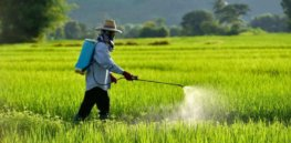 'There's so much misinformation swirling around the internet': Are pesticides really safe and necessary?
