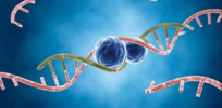 Incurable Huntington's disease? microRNA offers hope in the wake of failed clinical trials