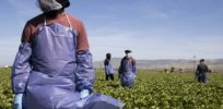 Vaccine disinformation and conspiracy theories run wild in California among Mexican farm workers. Here's what's being done to address that
