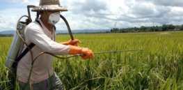 Viewpoint: 'Smart pesticide use' — Here's a way we can protect crops while preserving beneficial insects