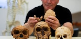 Is this skull unearthed in Israel the 'missing link' in human evolution that scientists have been hoping for?