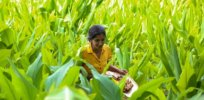 'Uncertain and confused': Sri Lankan farmers facing government's 'misguided' ban on all synthetic chemicals fear sustainable farming will be unattainable