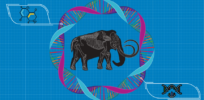 Here's an update on the (quixotic?) CRISPR gene editing project to revive the defunct woolly mammoth