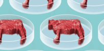 Consistent global regulations essential to bring cell-based meat into the mainstream
