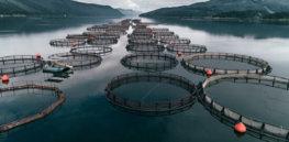 Meet the 'disruptive technologies' revolutionizing aquaculture