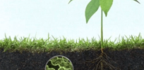 Saving our soil: 4 new microbial technologies that keep soil healthy and us fed