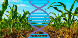 Viewpoint: Carbon-preserving regenerative agriculture inextricably linked to CRISPR and gene edited crops