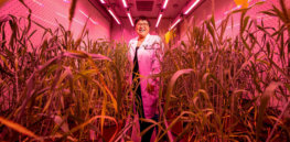 Agricultural sustainability means different things from country to country. What role is there for technology and gene editing?