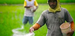 Viewpoint: 'Well intentioned' Sri Lankan plan to embrace organic farming tainted by lack of science, damaging its economy, health, and food security