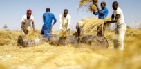 Nigeria moves forward with nitrogen-efficient GMO rice
