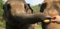 Elephants are clever problem solvers — and they have distinct personalities, too